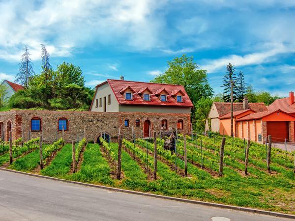 Jižní Morava v rodinném vinařství u Znojma s neomezenou konzumací a degustací vína + snídaně