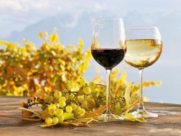 Za vínem a do Aqualandu Moravia