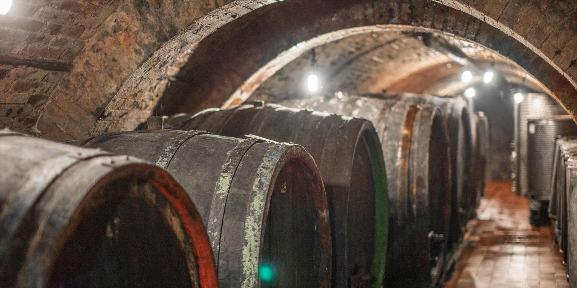 Posezení u vína i večerní degustace v Apartmánech nad sklepem ve Velkých Pavlovicích s platností do března 2021