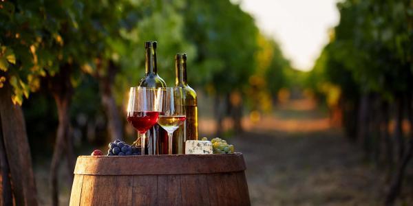Pobyt s degustací a neomezenou konzumací vína ve Vinařství Lintner na Znojemsku