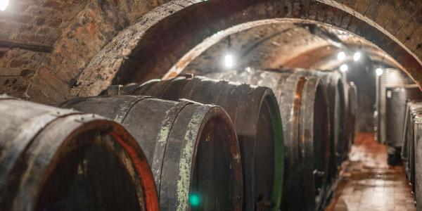 Posezení u vína i večerní degustace v Apartmánech nad sklepem ve Velkých Pavlovicích s platností do prosince 2021